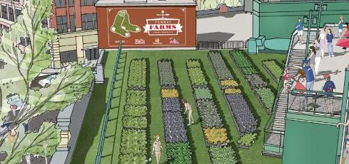 Fenway Farms rendering